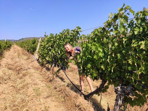 Wine Tour Choosen (52) edt